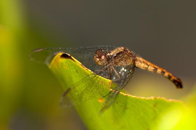Żółty dragonfly na liściu