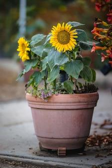 Żółty i biały kwiat w brązowym glinianym garnku