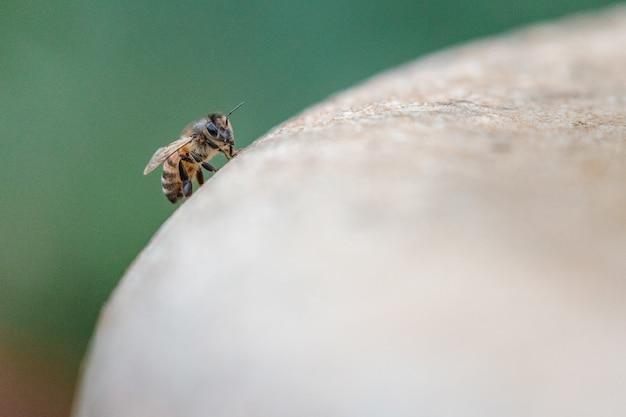 Żółty I Czarny Pszczoła Na Brązowej Powierzchni Drewnianej W Fotografii Z Bliska W Ciągu Dnia Darmowe Zdjęcia