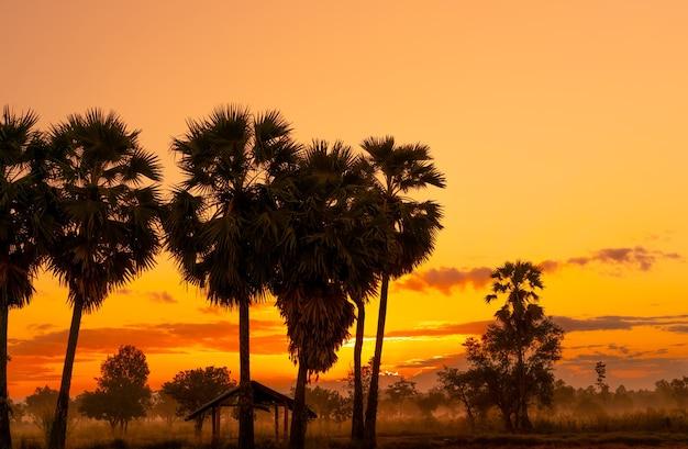 Żółty i pomarańczowy wschód słońca niebo za palmą i lasem tropikalnym. złoty wschód słońca niebo i sylwetka palmy cukrowej i chaty na obszarach wiejskich. widok na kraj. pomarańczowy i czerwony wschód słońca świeci w lesie sawanny.