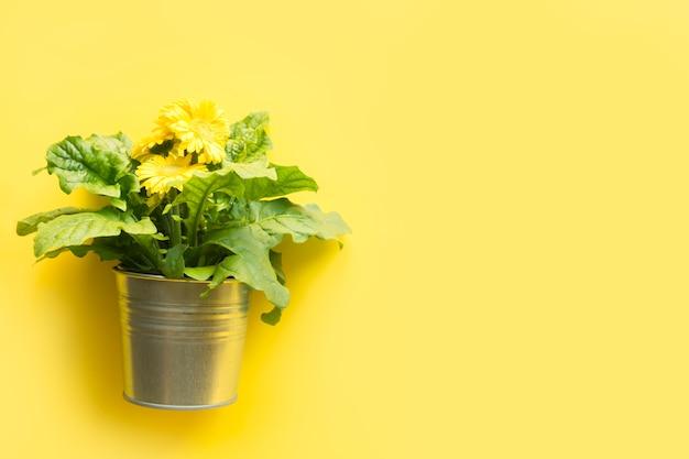 Żółty jaskrawy gerbera odizolowywający na kolorze żółtym.