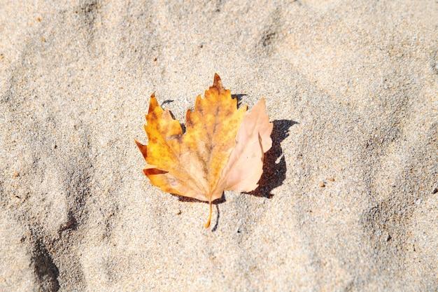 Żółty jesień liść na piasku. jesień na plaży