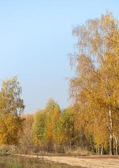 Żółty jesienny las w słoneczny dzień z błękitnym niebem