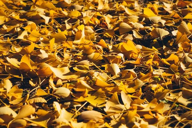Żółty jesienny liść miłorzębu na podłodze w świetle słonecznym. obraz filtra filmowego.