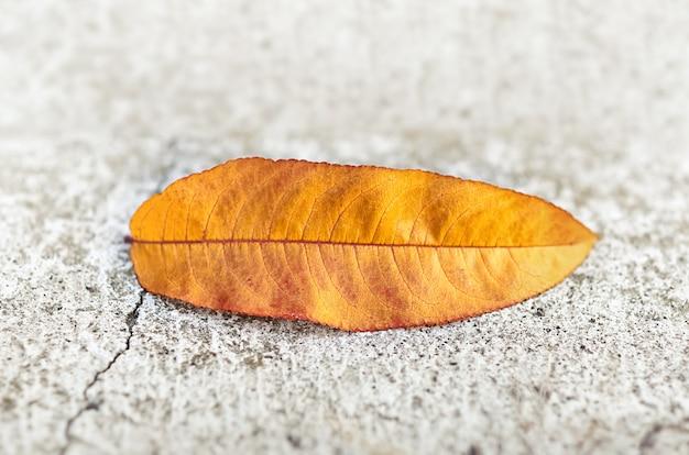 Żółty jesienny liść na betonowej powierzchni