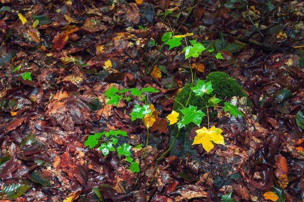 Żółty jesienny liść w lesie