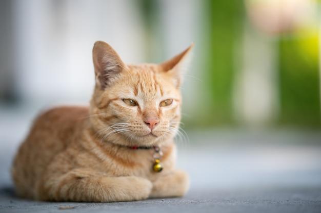 Żółty kot siedzi w bochenku z zamkniętymi oczami.