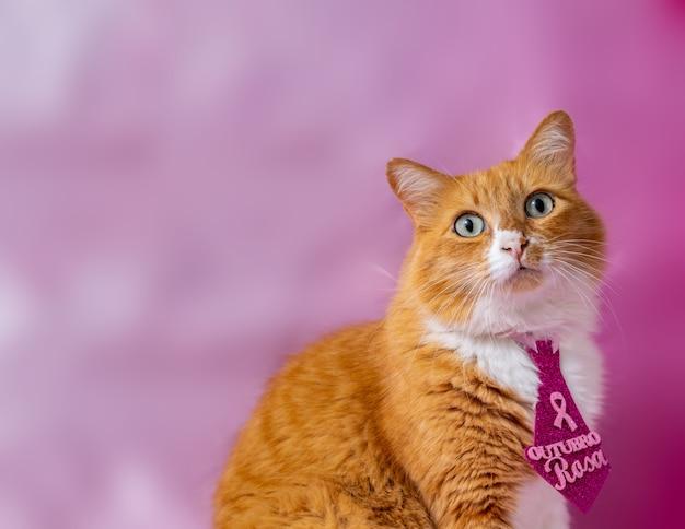 """Żółty kot z krawatem z napisem """"różowy październik"""" po portugalsku"""