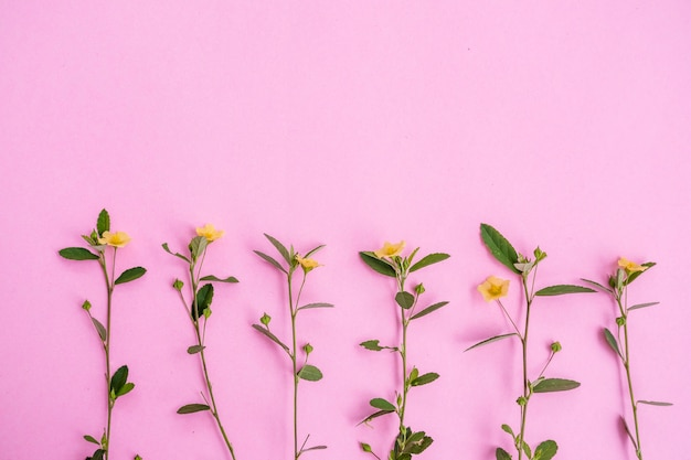 Żółty kwiat i zielony liść na białym tle na różowym tle papieru, minimalny pomysł na koncepcję.