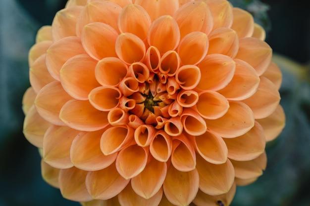 Żółty kwiat klastra