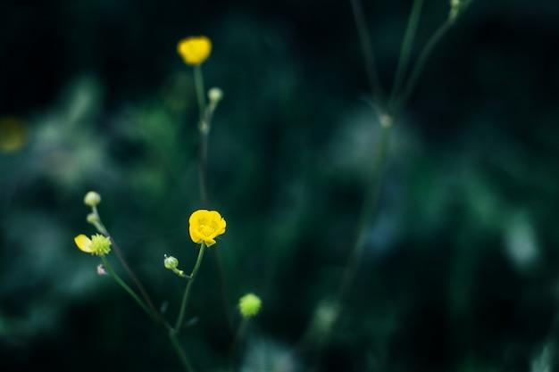 Żółty kwiat na czarnym tle