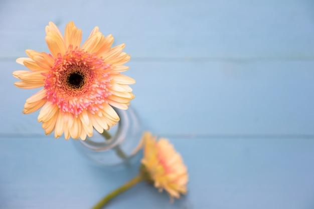 Żółty kwiat na jaskrawym błękitnym drewnianym tle z płatkami. letnie płaskie mieszkanie.