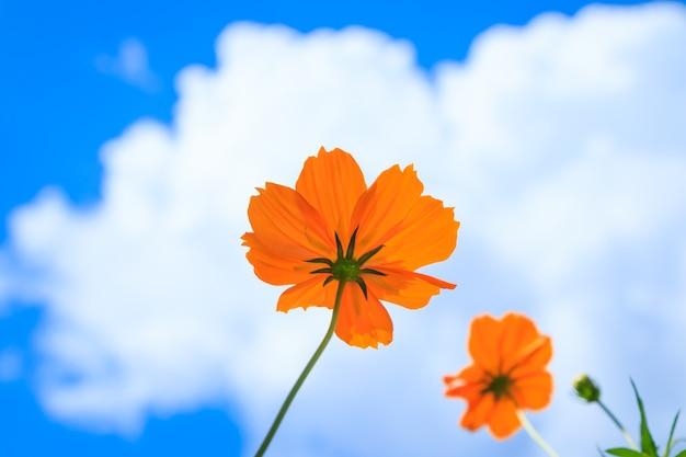 Żółty kwiat na niebieskiego nieba tle