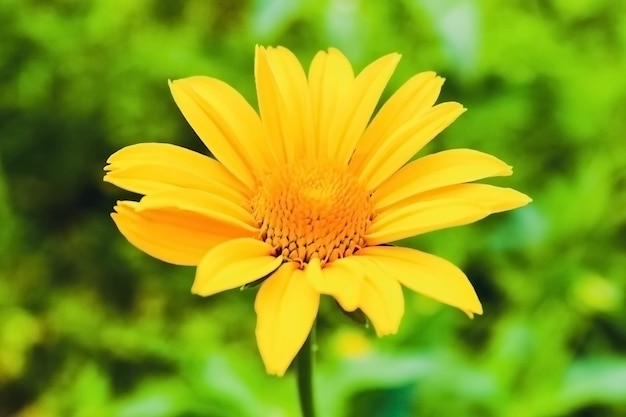 Żółty kwiat na zielonym tle