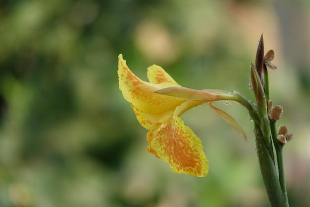 Żółty kwiat otwarty