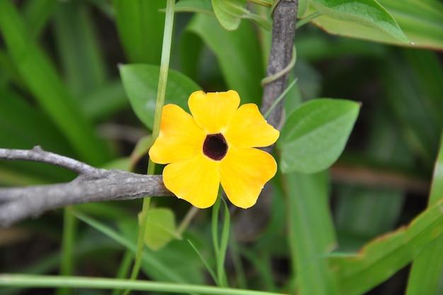 Żółty kwiat w przyrodzie