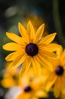 Żółty kwiat w soczewce z funkcją tilt shift