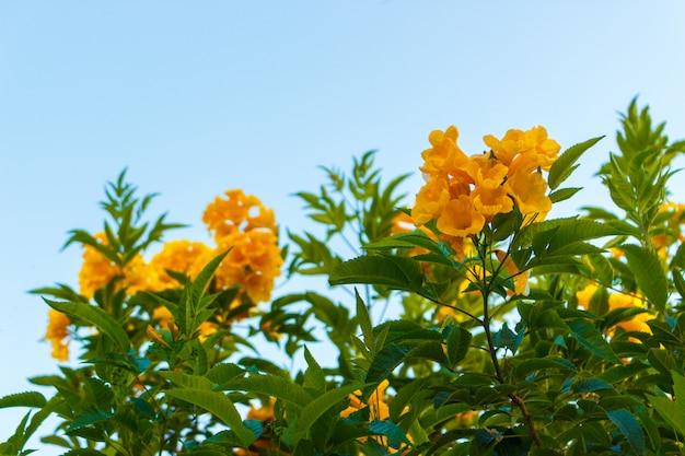 Żółty kwiat z niebieskim niebem bez chmury