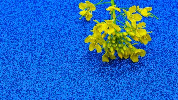 Żółty kwiatostan rzepiku na abstrakcyjnym błyszczącym niebieskim tle
