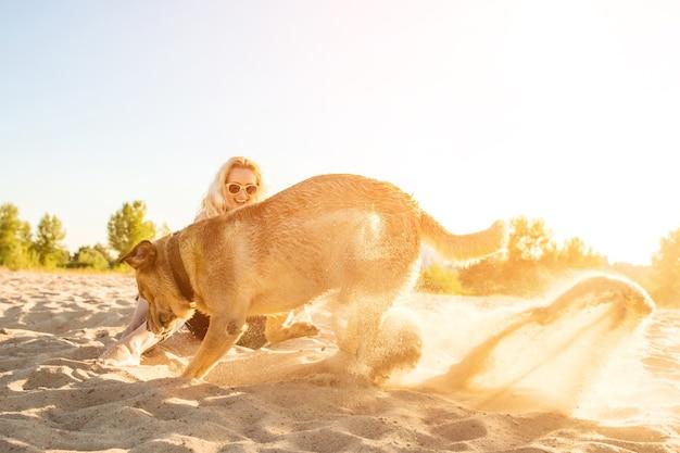 Żółty labrador retriever kopiący w piasku na plaży w słoneczny dzień rozbłysku słonecznego