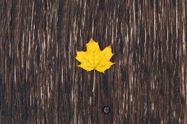 Żółty liść klonu na drewnianej desce, jesienny brązowy liść na brązowym biurku