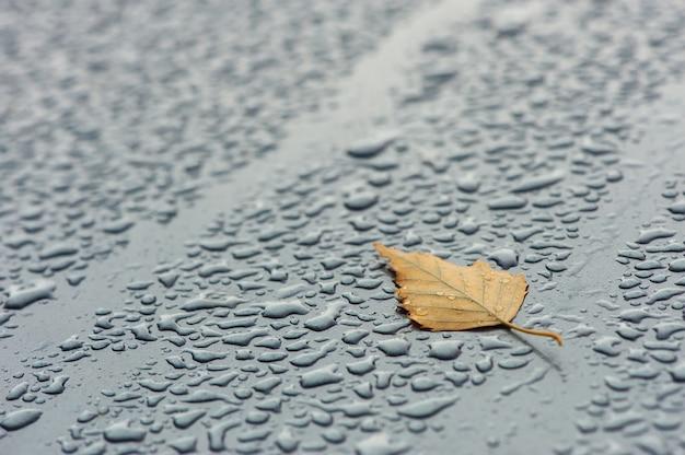 Żółty liść na mokrej nawierzchni