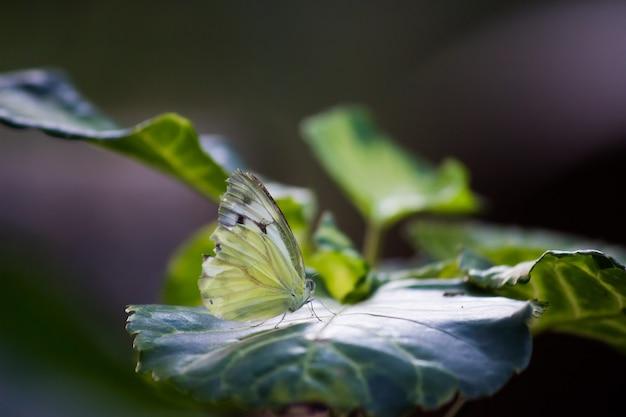 Żółty motyl trawiasty odpoczywający na roślinie w ogrodzie