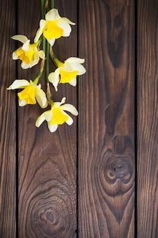 Żółty narcyz na ciemnej powierzchni drewnianej