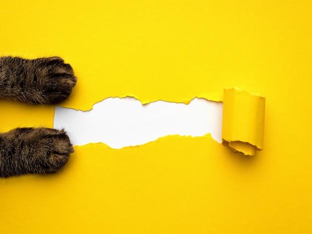 Żółty papier rozdarty z kotem nogi tło