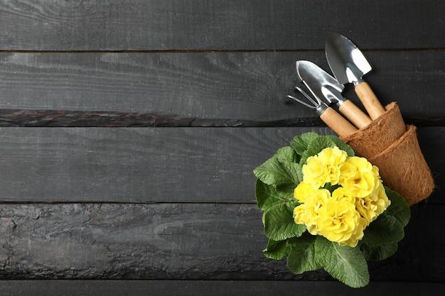 Żółty pierwiosnek i ogrodnictwo narzędzia na drewnianym, odgórnym widoku ,.