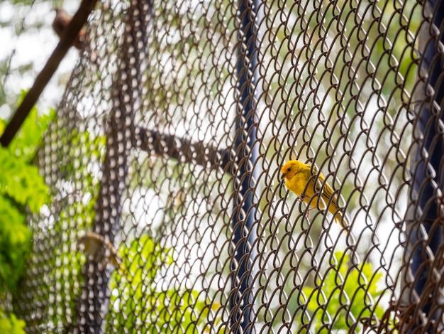 Żółty ptak jest na metalowej siatce