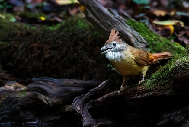 Żółty ptak perching na gałązce
