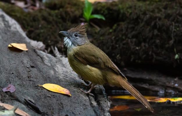 Żółty ptak perching na skale