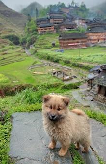 Żółty puszysty szczeniak stojący na skale na tle chińskiej etnicznej wioski położonej w górzystym obszarze południowo-zachodnich chin.
