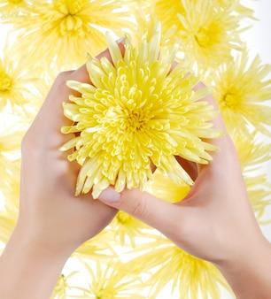 Żółty rumianek