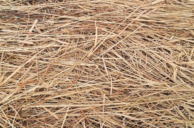 Żółty tekstura tło słomy i siana lub suchej trawy lub wzór po hasst. makieta, układ lub szablon tekstu i dodawanie elementów