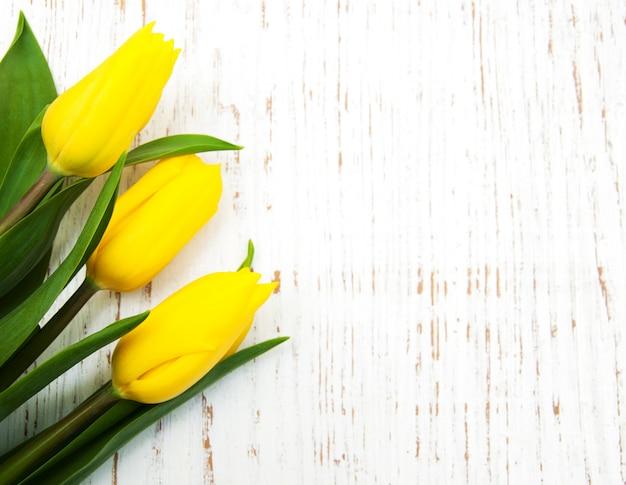 Żółty tulipan kwitnie tło