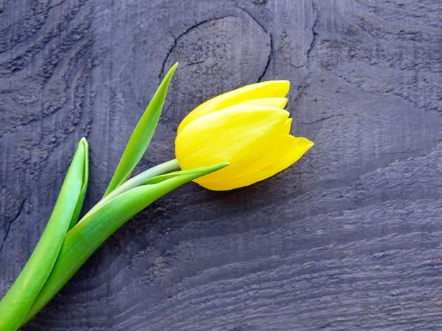 Żółty tulipan na starej drewnianej powierzchni