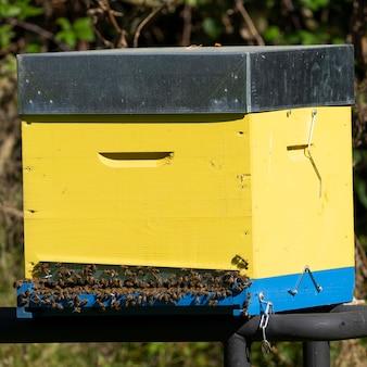 Żółty ul z pszczołami we francji