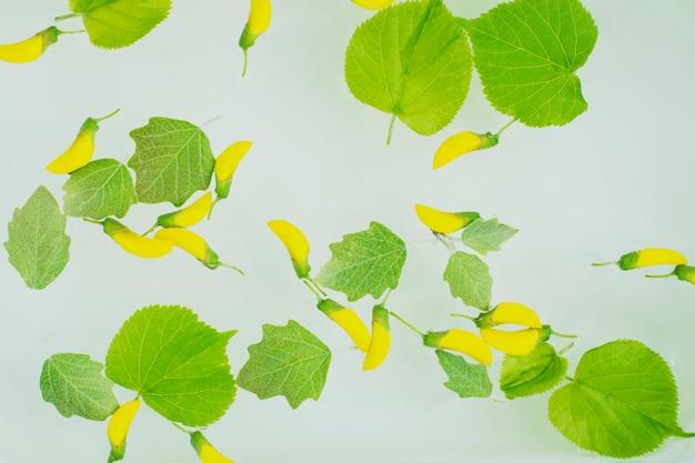 Żółty wiosenny kwiat i zielony liść w wodzie.