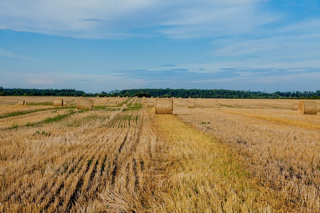 Żółty złoty bele słomy siana w polu ściernisko, pole rolne pod błękitne niebo z chmurami. słoma na łące. naturalny krajobraz wsi. uprawa zbóż, żniwa.