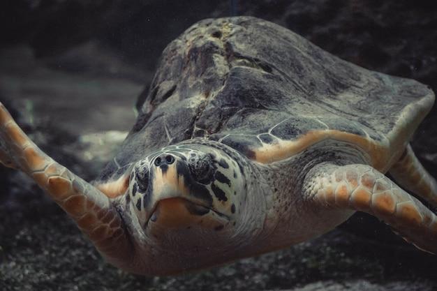 Żółw mnie obserwuje