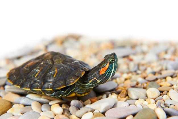 Żółw morski na piasku z odosobnionym białym tłem