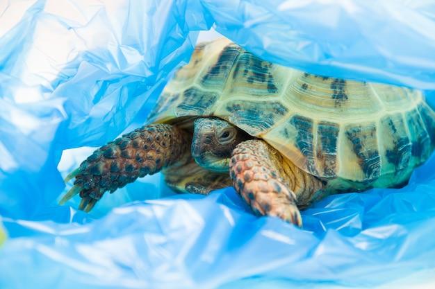 Żółw w niebieskiej plastikowej torbie