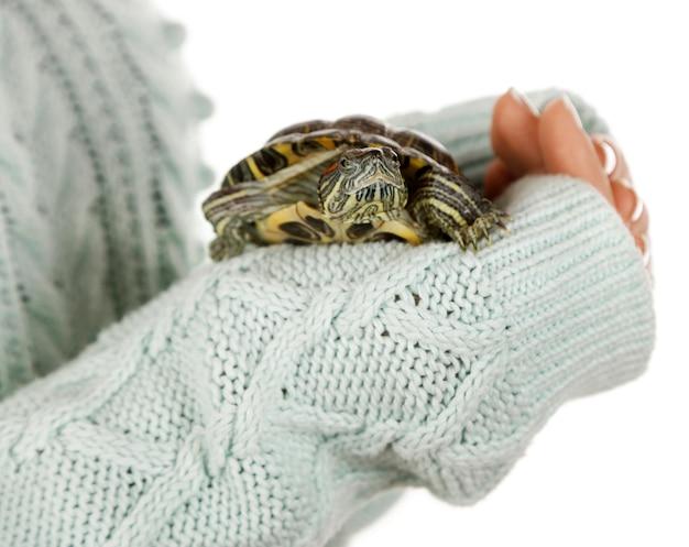 Żółw w rękach kobiety, z bliska