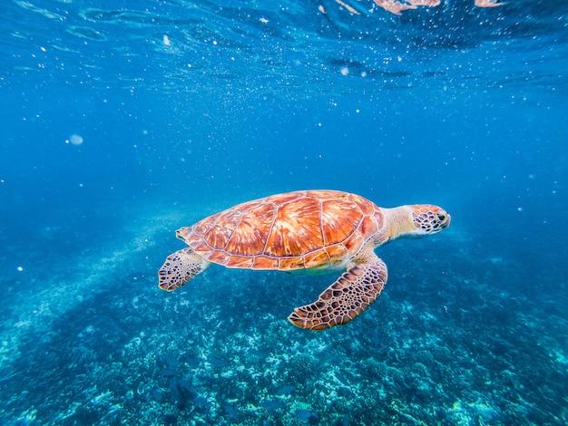 Żółw w wodzie