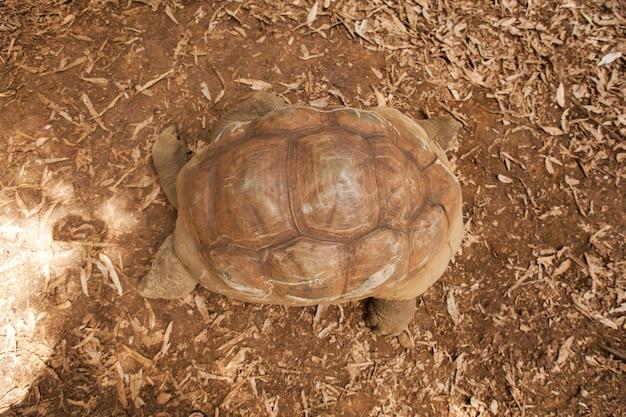 Żółwie lądowe
