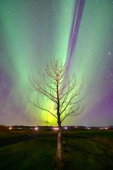 Zorza polarna zorza na islandii nad drzewem