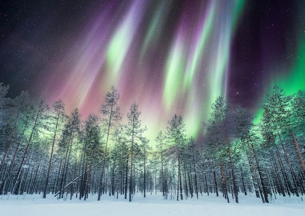 Zorzy borealis nad sosnowym lasem na śniegu