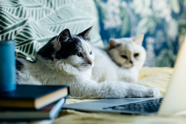 Zostań w domu bądź bezpieczny. kot przy komputerze podczas kwarantanny i samoizolacji podczas epidemii koronawirusa.
